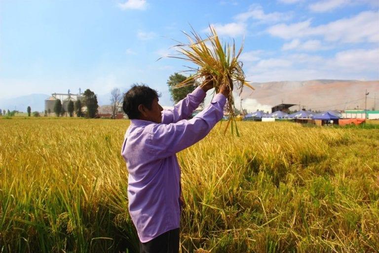 Revista La Punta Digital organiza webinar sobre experiencias exitosas de promoción agraria