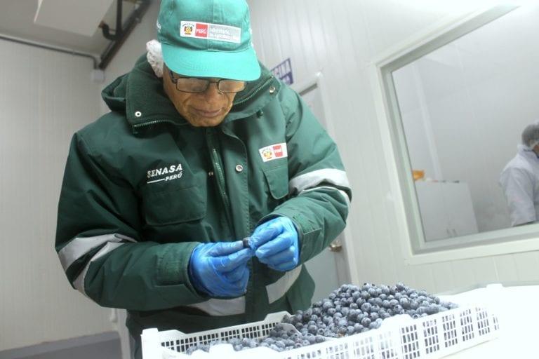 Primer lote de 14.5 toneladas de arándanos se exporta de Moquegua a Estados Unidos