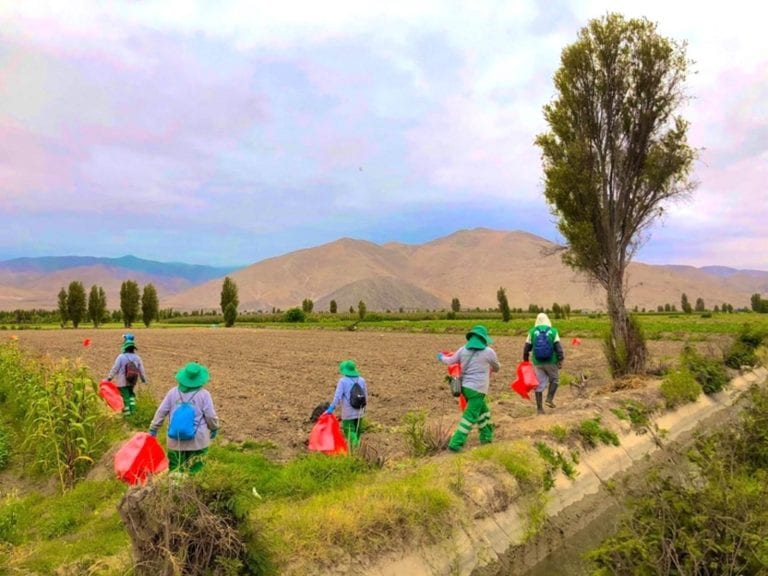 Inician recolección de envases agroquímicos en Punta de Bombón
