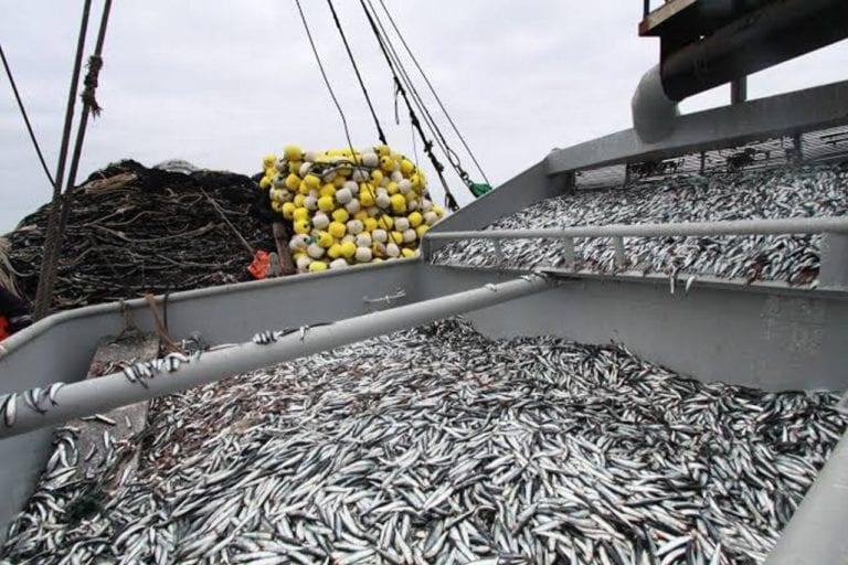 Primera temporada de pesca de anchoveta iniciará el 10 de marzo en zona sur del litoral