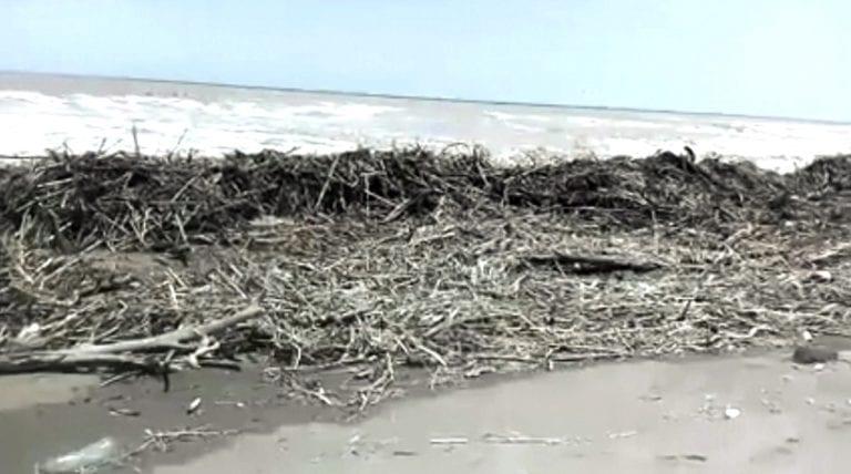 Playa Patillos está llena de escombros y desechos orgánicos