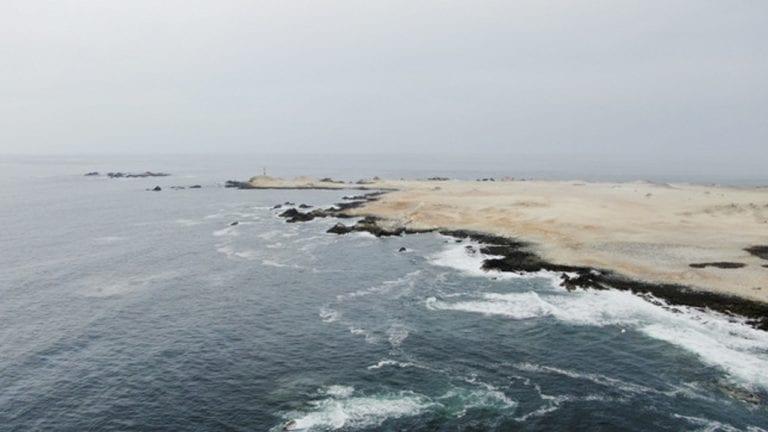 Ilo: Gobierno establece cuota para la captura de pulpo en Punta Coles