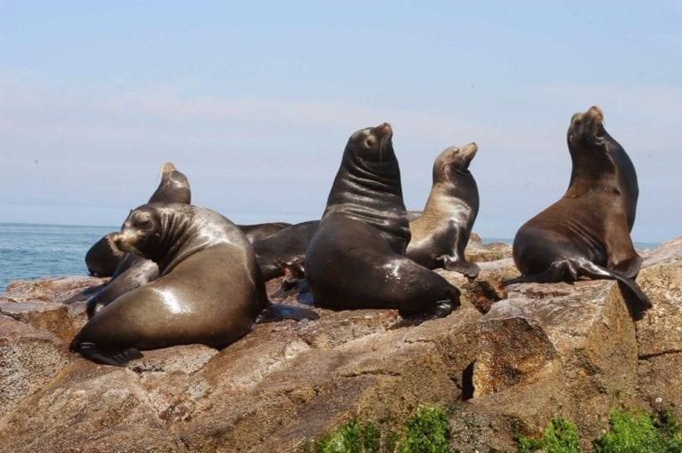 Punta Coles, la reserva que resguarda la vida de miles de especies marinas amenazadas