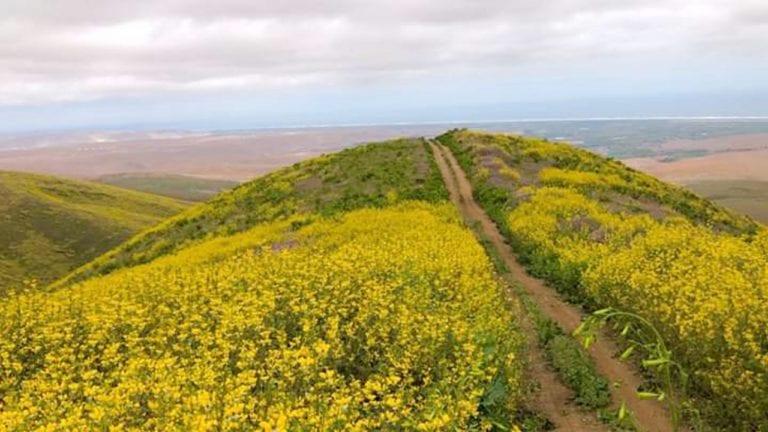 Oficializan declaratoria de interés de lomas de Islay como ecosistemas frágiles