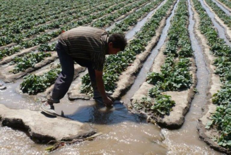 ANA garantiza suministro de agua para uso agrícola en el valle de Tambo