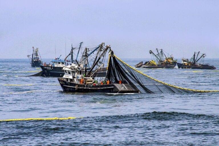 Pescadores artesanales solicitan nulidad del D.S. 018-2020-PRODUCE