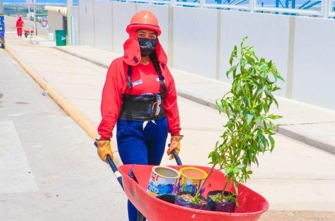Realizan campaña de arborización en Alto la Punta