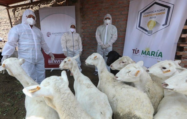 Prevén incrementar producción de carne de ovino