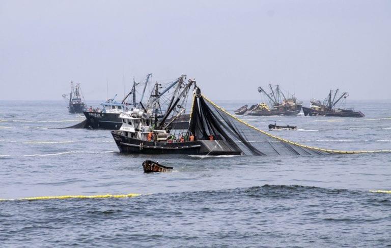 Produce autoriza pesca exploratoria de anchoveta y anchoveta blanca en el sur