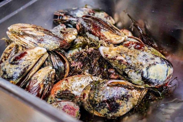 Produce autoriza la pesca exploratoria del recuso choro en el litoral de Ilo