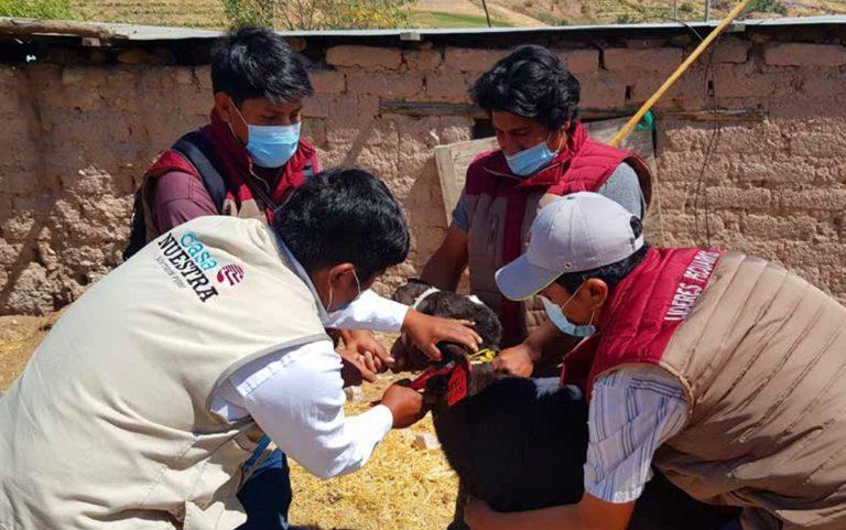 Casa Nuestra: seguimos formando líderes pecuarios en el distrito de Torata