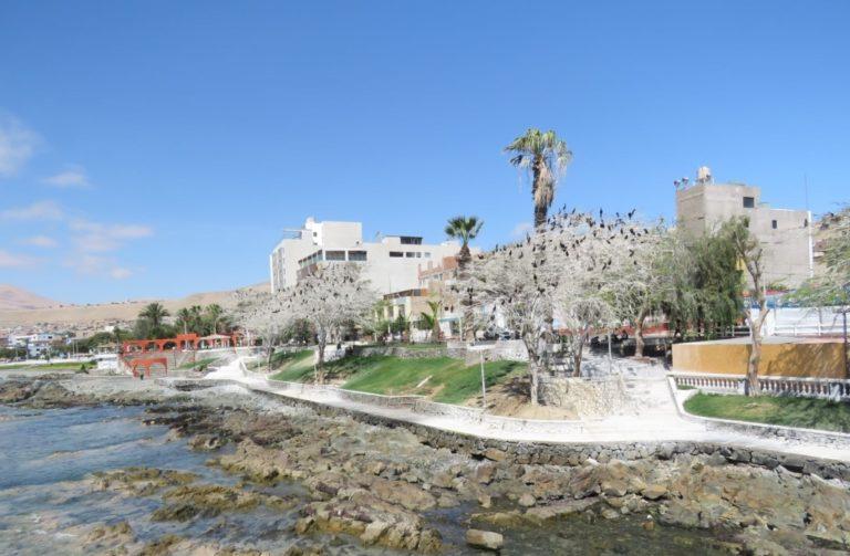 """No se talarán árboles afectados por """"cormoranes"""", asegura funcionaria de la MPI"""