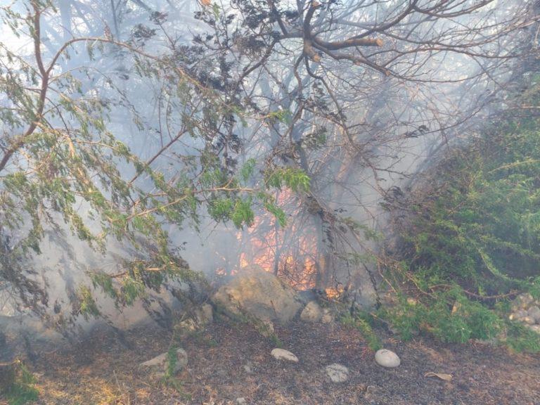 Incendio forestal consume una hectárea de árboles y matorrales