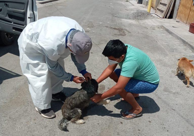 Vacunan a más de 110 canes en Mejía