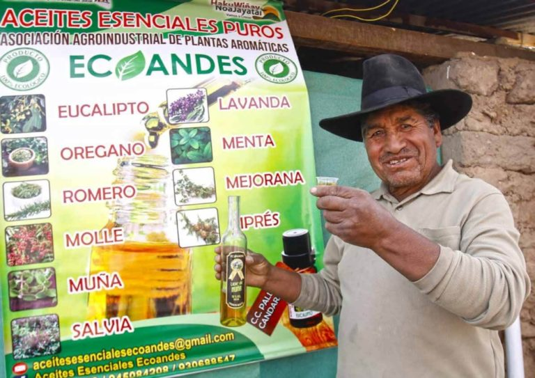 Capital semilla impulsa producción de hierbas aromáticas en Candarave