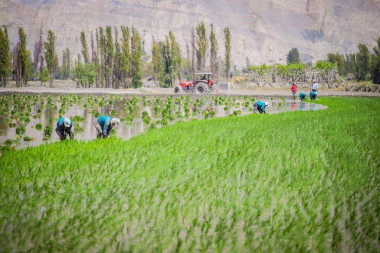 Más de seis mil agricultores en proceso de titulación de sus predios