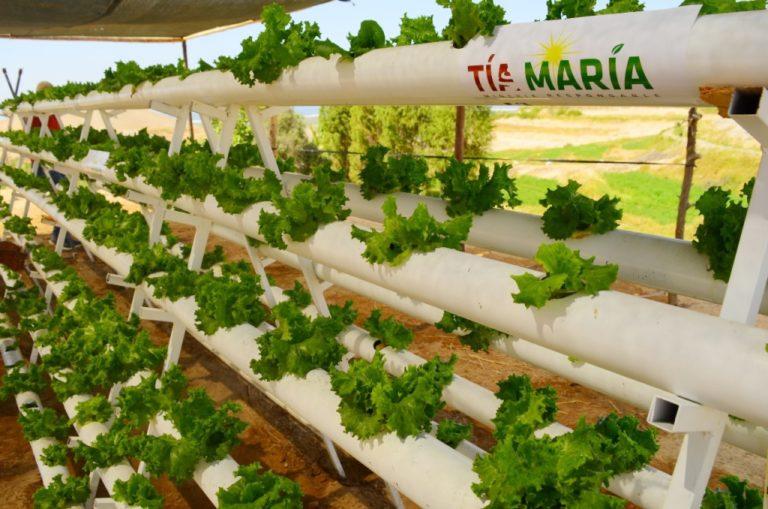 Producirán cultivos hidropónicos en Deán Valdivia