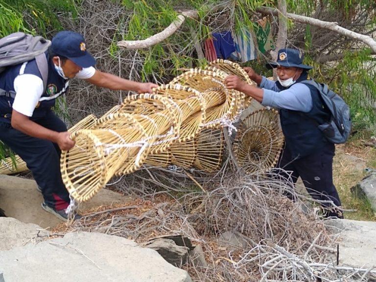 Arequipa en veda: Incautan 130 kilos de camarón en lo que va del año