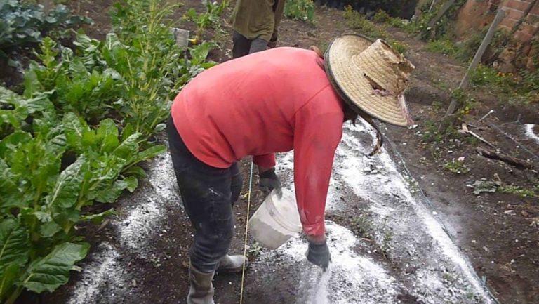Agricultores preocupados por incremento del precio de fertilizantes