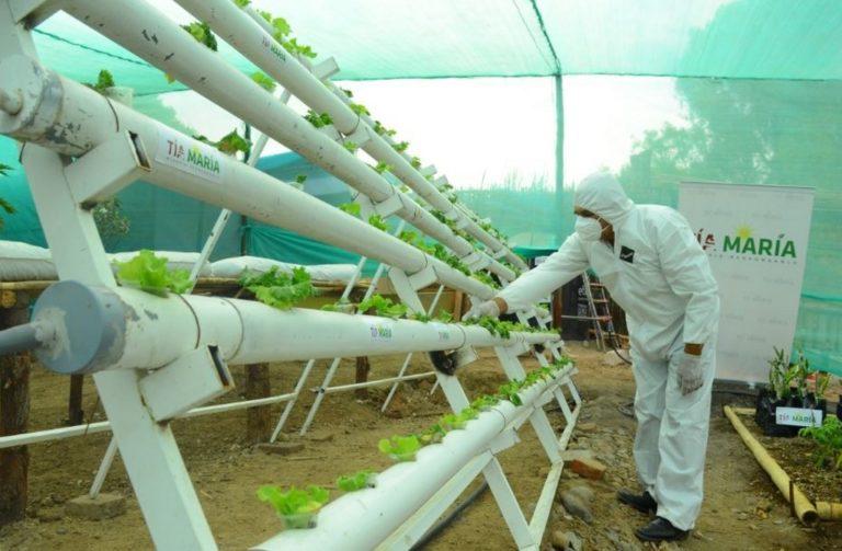 Instalan vivero para producción de plantones en Deán Valdivia