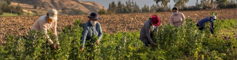 Revista La Punta Digital organiza webinar sobre emprendedores agropecuarios