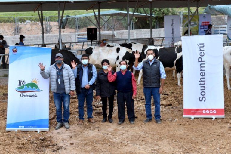 Fortalecen producción ganadera en Ite con entrega de 21 vaquillonas como parte del Plan de Desarrollo Agropecuario
