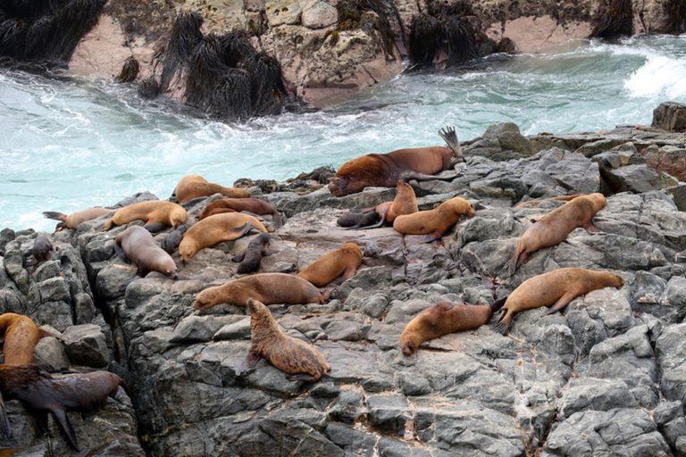 Se reinician actividades turísticas en Punta Coles de la provincia de Ilo
