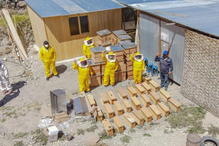 Southern Perú fomenta proyecto para producción de miel orgánica de abejas en Candarave
