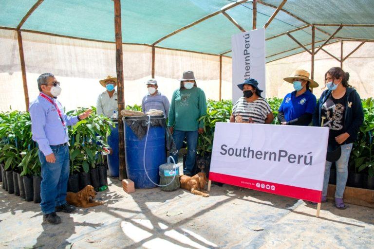 Southern Perú impulsa emprendimiento de Ilabaya para producir palta Hass y Zutano