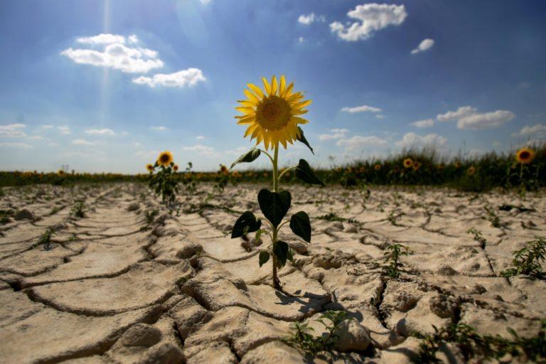 Lanzan concurso regional de periodismo sobre cambio climático