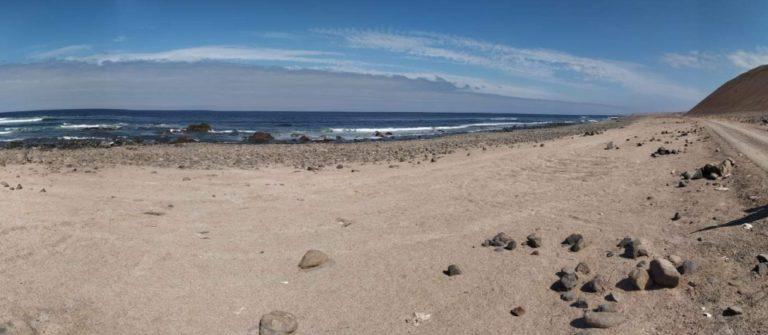 Ilo: gran cantidad de peces muertos aparecen en la playa Icuy