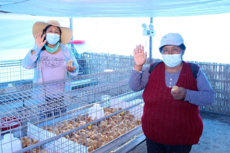 Southern Perú promueve proyecto productivo avícola en Ite con capital semilla