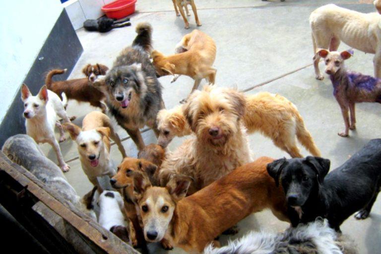 Gobierno oficializa norma que prioriza esterilización de perros y gatos