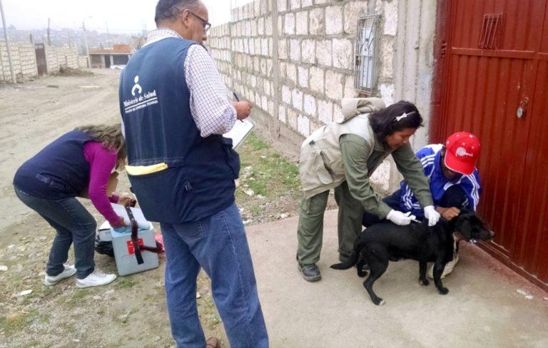Nuevo caso de rabia canina en Arequipa