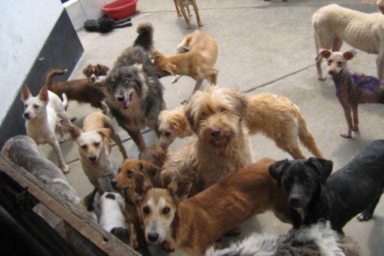 Pleno aprobó ley que prioriza esterilización de perros y gatos