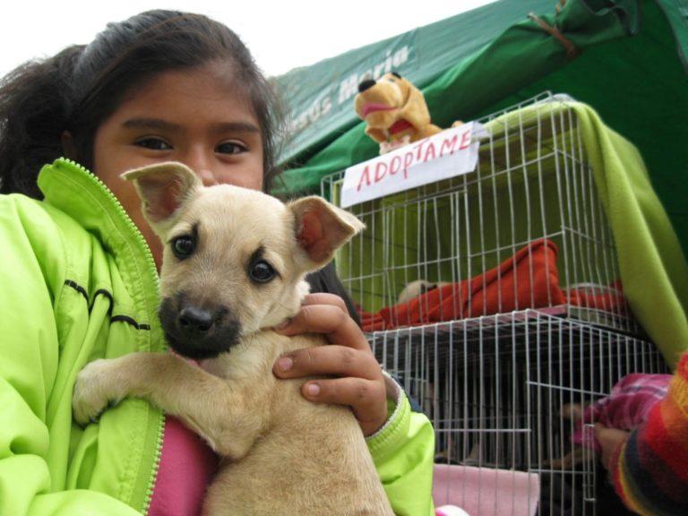 Organizan feria de adopción de mascotas en Mollendo