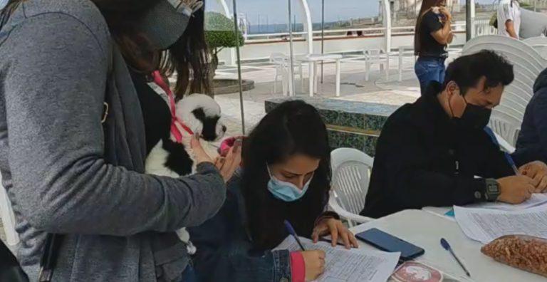 """""""Adopta tu Pata II"""": Más de 20 mascotas fueron adquiridas en campaña"""