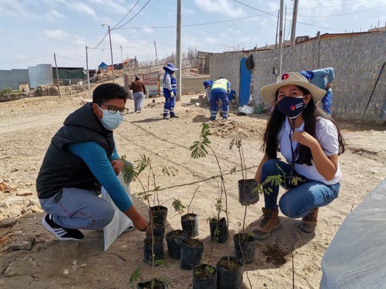 Mollendo: Plantan 150 arbolitos en Mirador al Pacífico